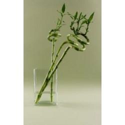 Bambou - spirale
