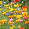 Fleurs d'Ete - mélange