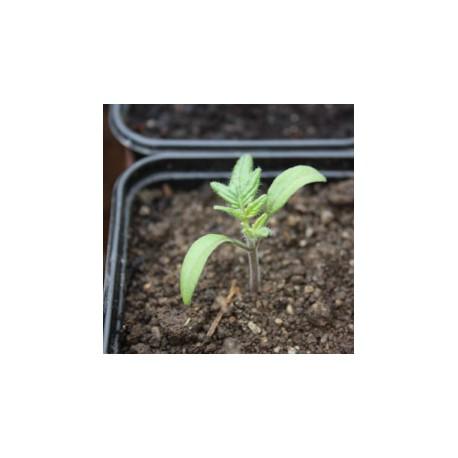 Catalogue des jeunes plants maraîchers