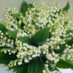 Muguet en bouquet
